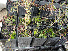Some of the 460 seedlings we planted during NTD