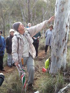 Tree Walk @ Mt Majura nature reserve | Hackett | Australian Capital Territory | Australia
