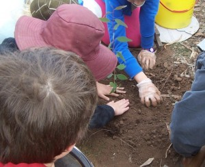 100_7629-plant-a-tree-crop