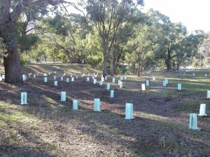 Drainage line horse paddock plantings rs DSCN4391