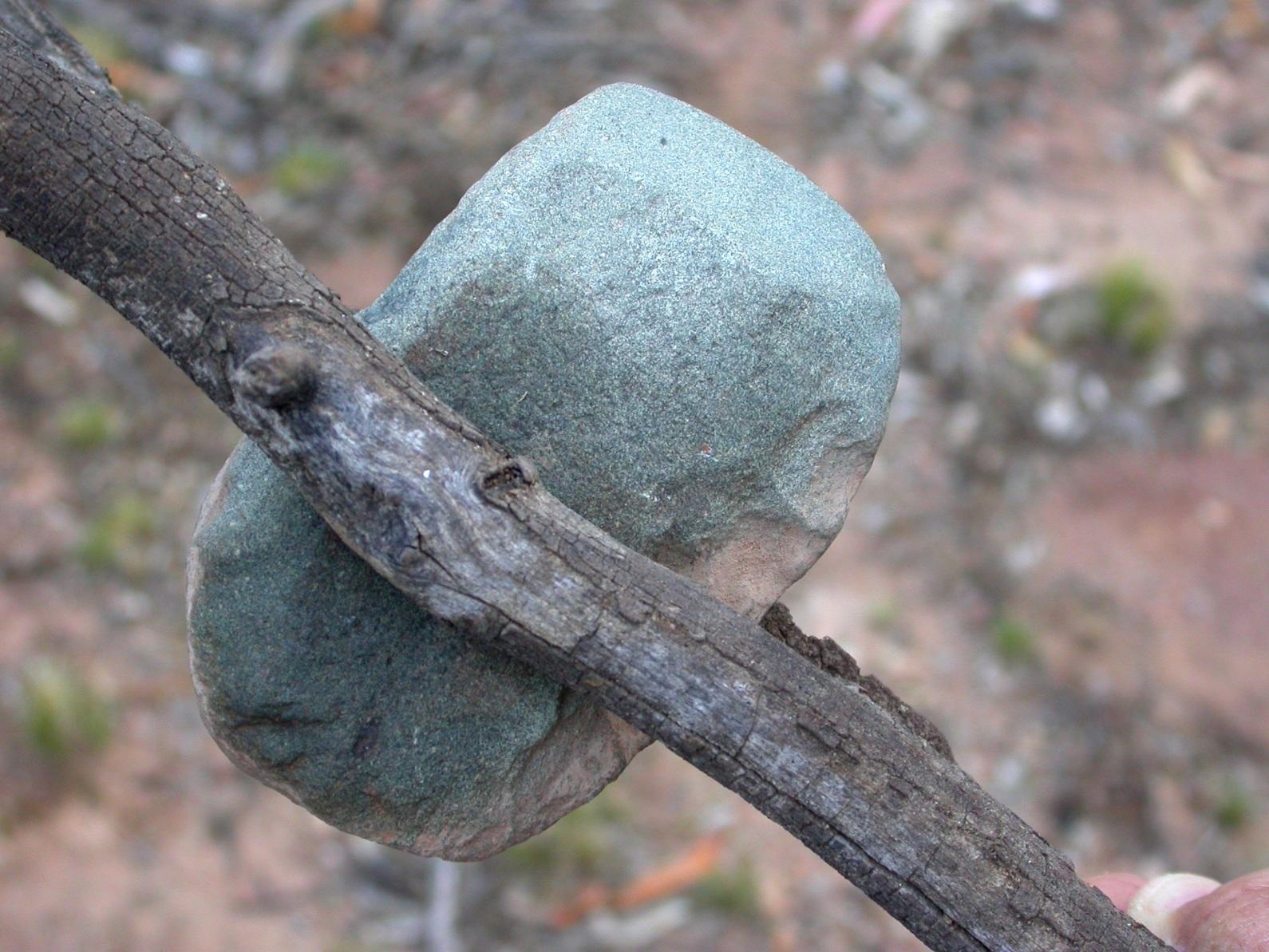 Aboriginal Axehead with handle Mt Majura 24.02.2014DSCN0565